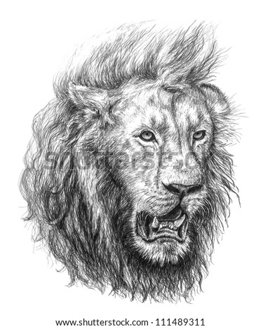 Pencil Drawing Stock Photos Images Amp Pictures Shutterstock