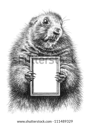 Pencil drawing of a marmot - stock photo