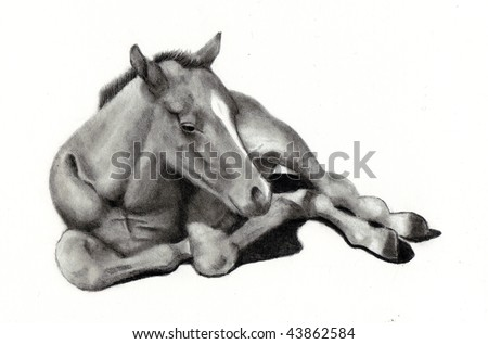 Pencil Drawing of Colt Lying Down - stock photo