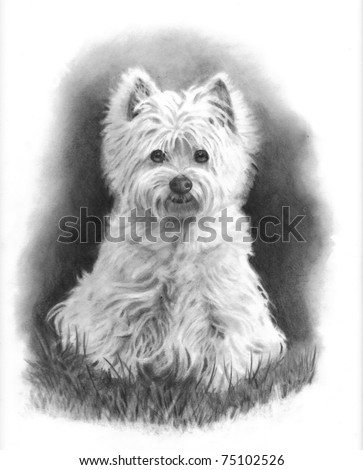 Pencil Drawing West Highland White Terrier - stock photo