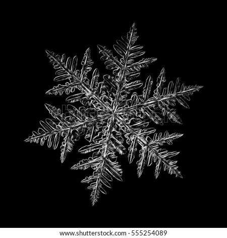 Pencil drawing: white snowflake on black background. This sketch based on macro photo of real snow crystal: large stellar dendrite with ornate arms and fine symmetry.