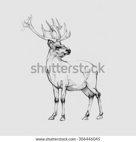 Pencil illustration, hand graphics - Deer - stock photo
