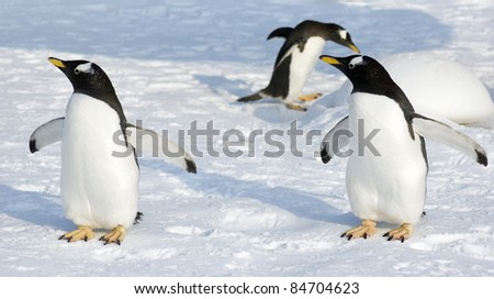 penguin - stock photo