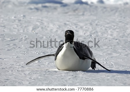 Penguin approaching - stock photo
