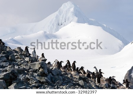 penguin colony with a view - stock photo