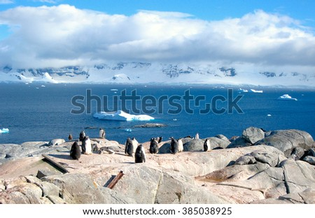Penguin Colony with Icebergs (Penguins - Antarctic Peninsula, Antarctica) - stock photo