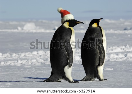 Penguin couple at Xmas - stock photo