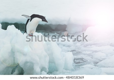 Penguin diving from melting ice