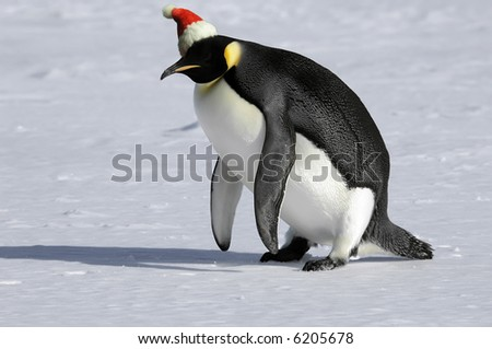 Penguin getting up for Christmas - stock photo