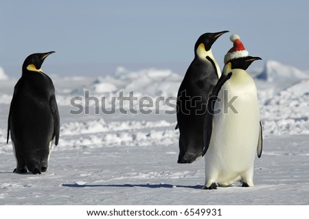 Penguin group at Christmas - stock photo
