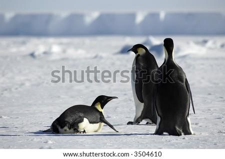 Penguin group in Antarctica - stock photo