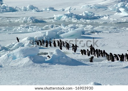 Penguin group with leader - stock photo