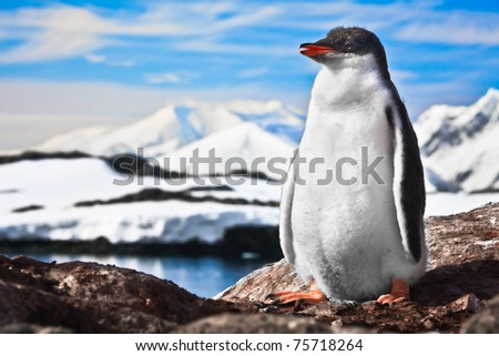 penguin have fun standing on the rocks - stock photo