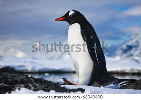 penguin have fun standing on the rocks in Antarctica - stock photo