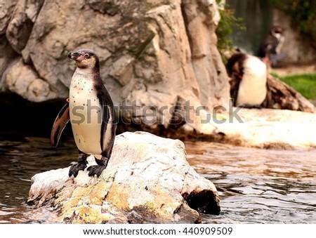 Penguin in Zoo - stock photo