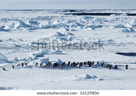 Penguin march - stock photo