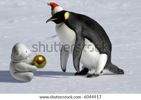 Penguin meets icebear on Christmas