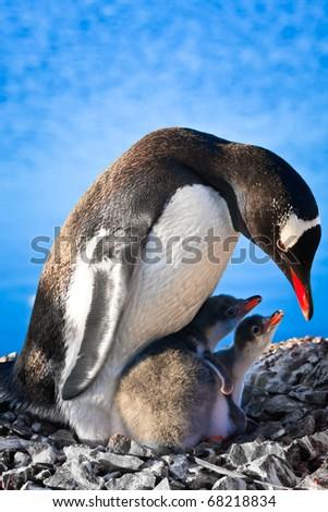 Penguin Mother and her two Children in Antarctica - stock photo