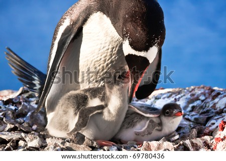 Penguin Mother and her two Children in Antarctica - stock photo