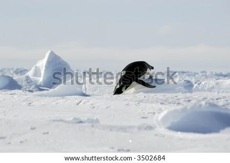 Penguin olympics - stock photo