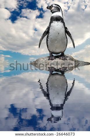 Penguin on the cliff - stock photo