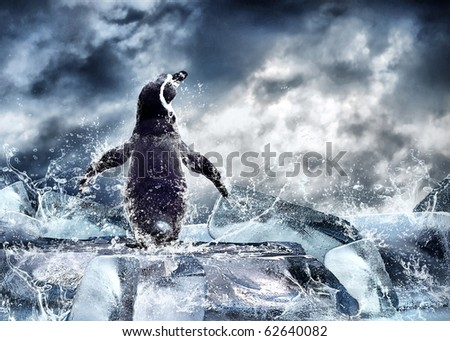 Penguin on the Ice in water drops. - stock photo
