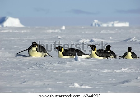 Penguin procession in Antarctica - stock photo