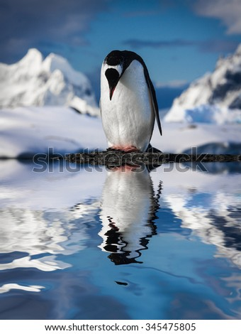 penguin standing on the rocks - stock photo
