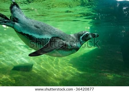 Penguin underwater - stock photo