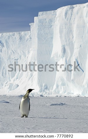 Penguin with iceberg - stock photo