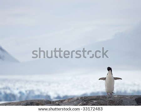 penguin  with open wings on a rock - stock photo
