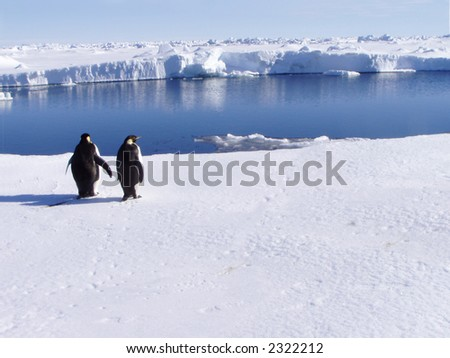 Penguins at the ocean - stock photo