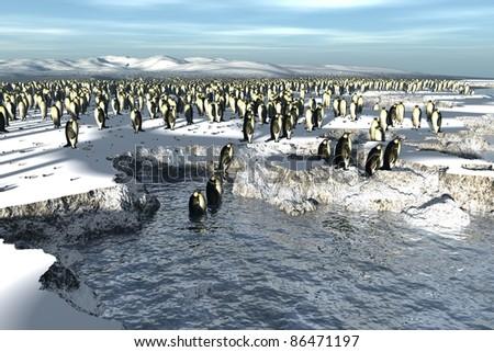 Penguins colony - stock photo