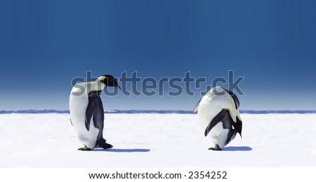 Penguins doing sports - stock photo