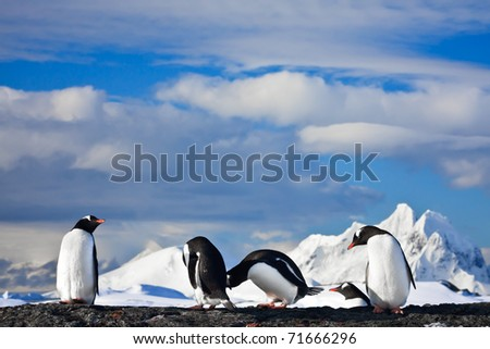 penguins dreaming sitting on a rock, mountains in the background - stock photo