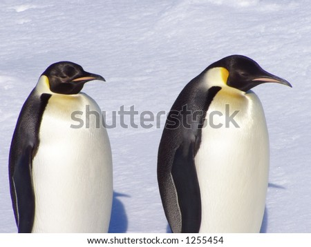 Penguins in Antarctica - stock photo