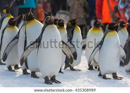 penguins in asahikawa zoo - stock photo