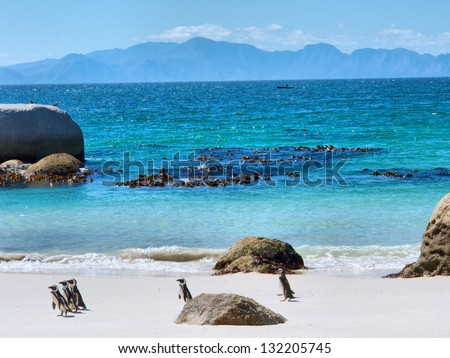Penguins on beach, mountains on horizon. Shot in the Boulders Beach Nature Reserve, near Cape Town, Western Cape, South Africa. - stock photo