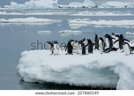 Penguins on the ice. - stock photo