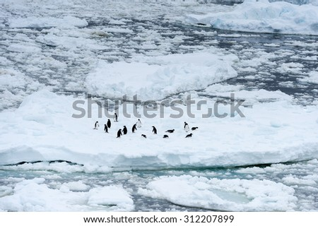 Penguins on the ice piece in the ocean