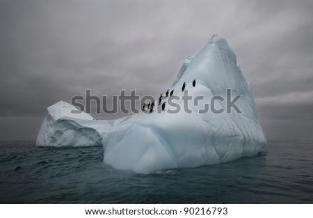 penguins on the iceberg - stock photo