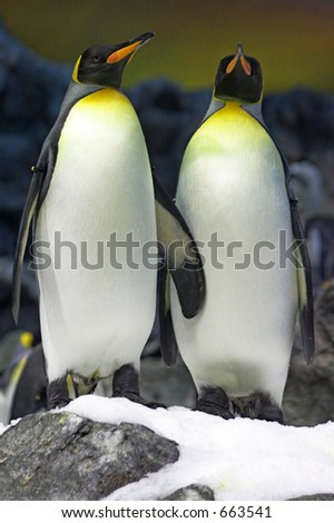 Penguins on the snow - stock photo