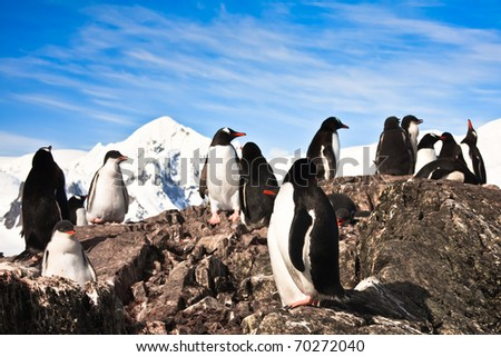 penguins on the stone coast of Antarctica, mountains in the background