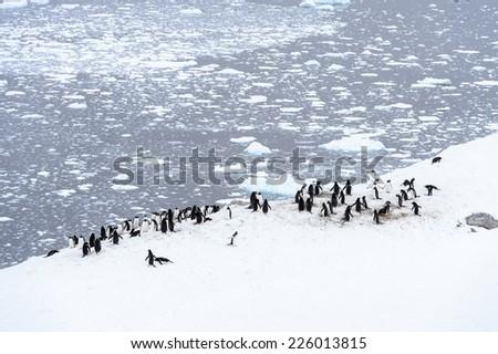 Penguins parade in Antarctica - stock photo