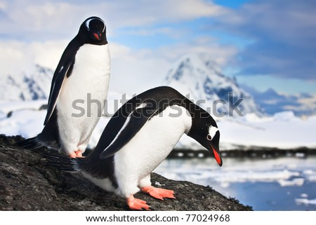 penguins standing, mountains in the background - stock photo