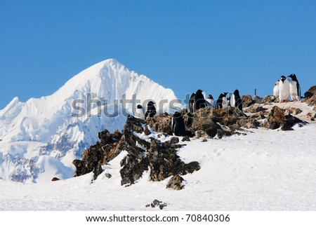 penguins standing on the rocks covered snow - stock photo