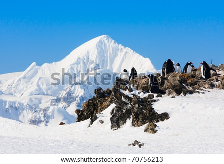 penguins standing on the rocks covered snow in Antarctica - stock photo