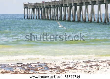 PENSACOLA BEACH - JUNE 23:  Seagulls soar over oil stained beaches in Pensacola, FL on June 23, 2010 as BP oil spill sheen washes ashore at the resort area. - stock photo