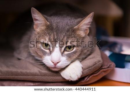 Pensive sad cat is home alone - stock photo