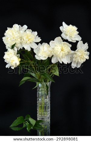 Peonies on a black background in a vase - stock photo